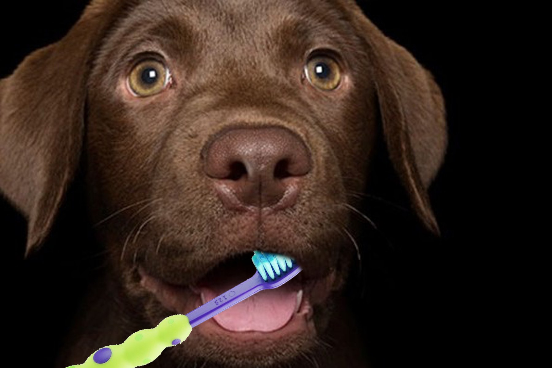 Your Pets Dental Care